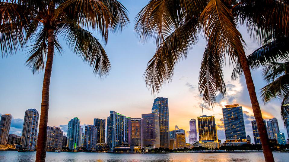 picture of the miami skyline framed by palm trees
