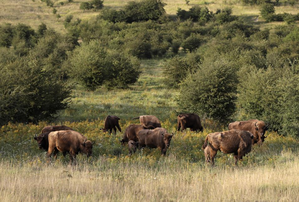 Czech Republic Wildlife Sanctuary
