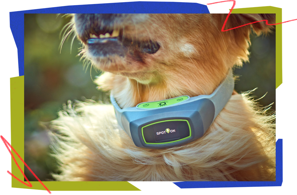 SpotOn virtual fence collar
