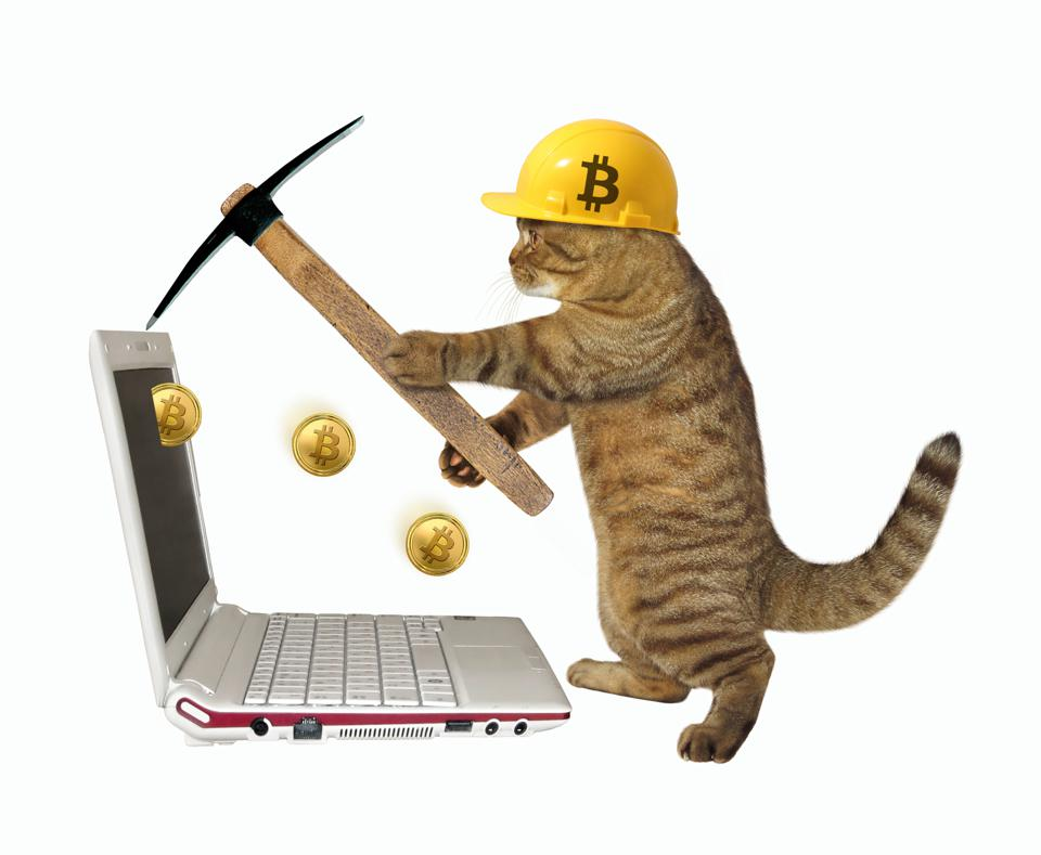 Cat in a helmet mines bitcoins