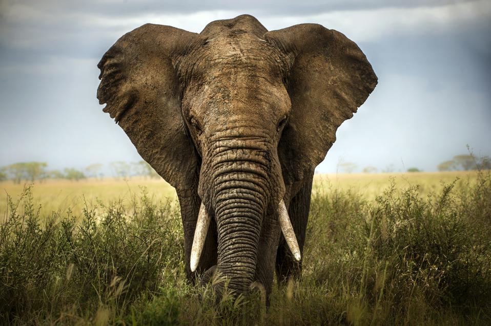 Kenya is open to U.S. travelers