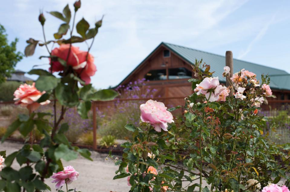 View of Bricoleur Vineyards from rose garden.