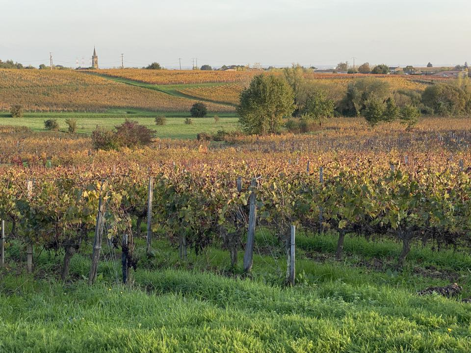 Vines at Château de Côts in Bourg, Bordeaux