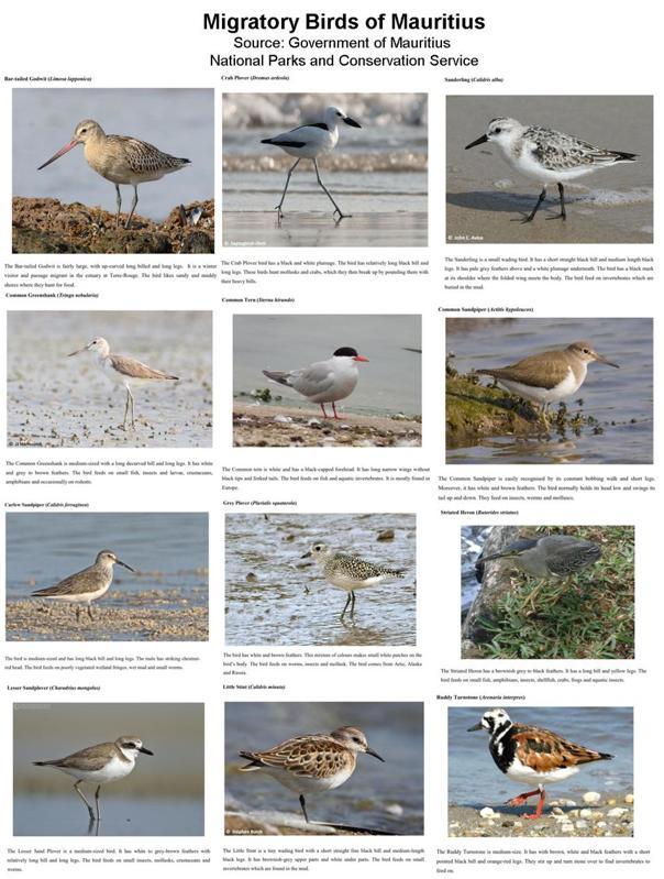 Important Migratory Birds found in Terre Rouge River Estuary Bird Sanctuary