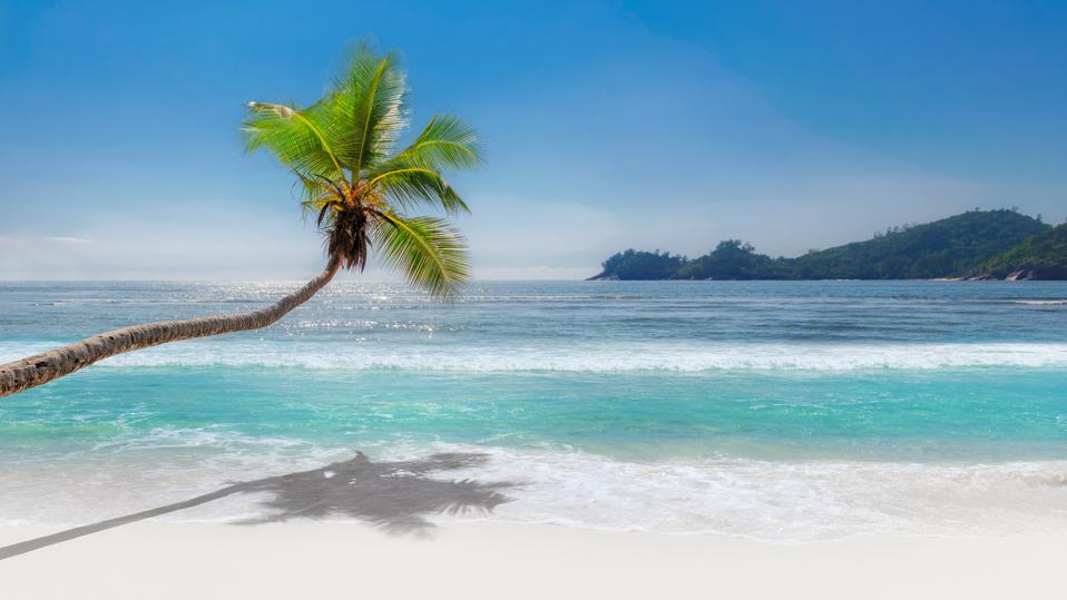 Paradise white sand beach and coconut palm