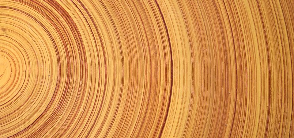 Spikes in radiocarbon levels can be seen in tree rings from the last 40,000 years.