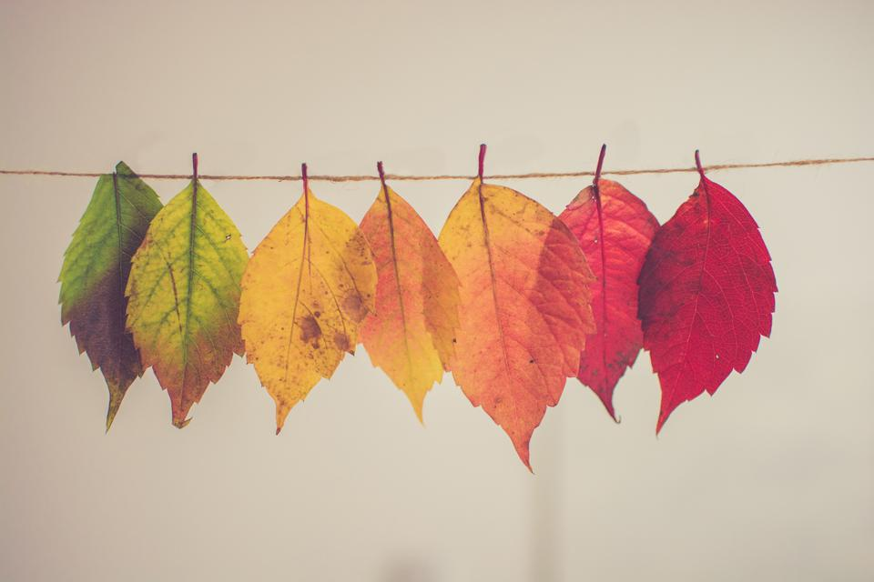 photo of coloured leaves hanging on piece of string