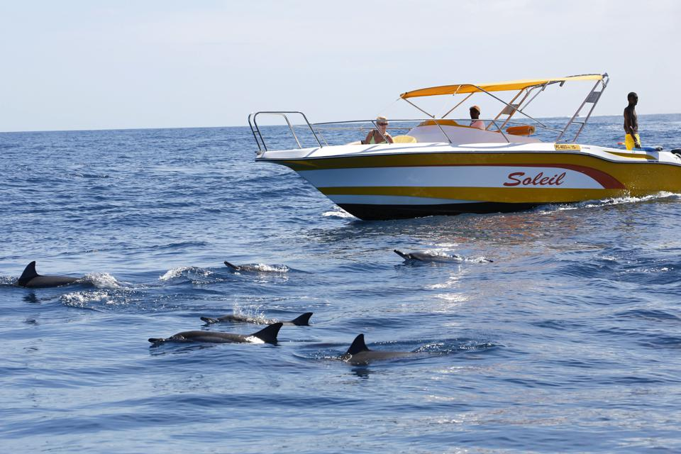 Tourism boats for wild dolphin watching are very popular in Mauritius, but have been impacted by the oil spill on two fronts, with the deaths of so much marine life