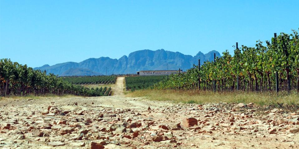 Vilafonté vineyards, South Africa