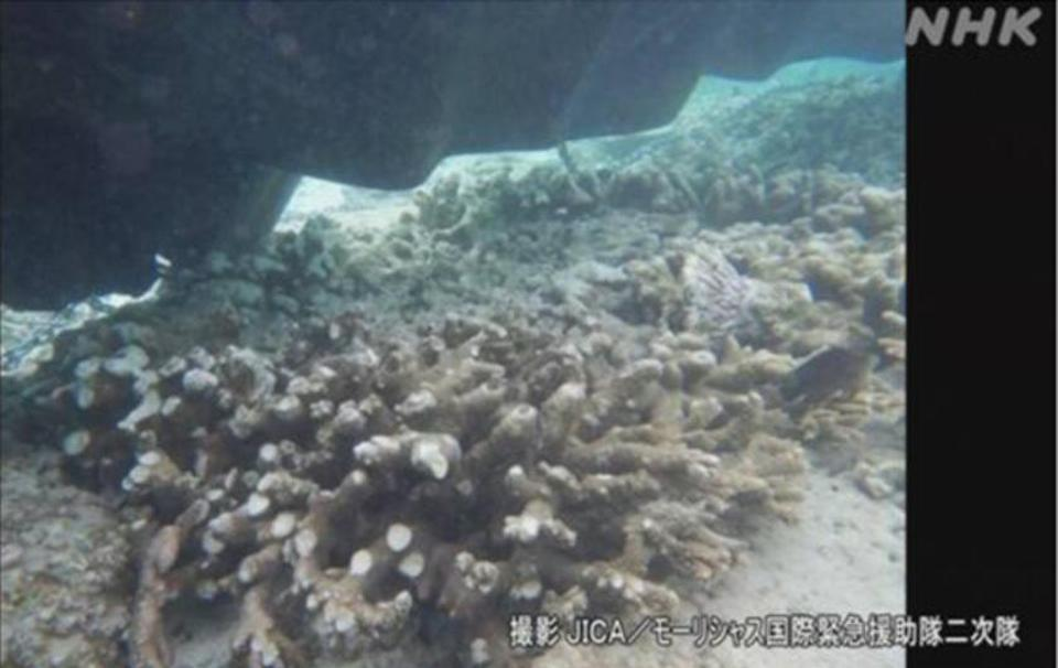 Japanese TV have been showing the extensive damage and milky turbidity caused by the Wakashio and salvage operation across Mauritius' coral lagoons.