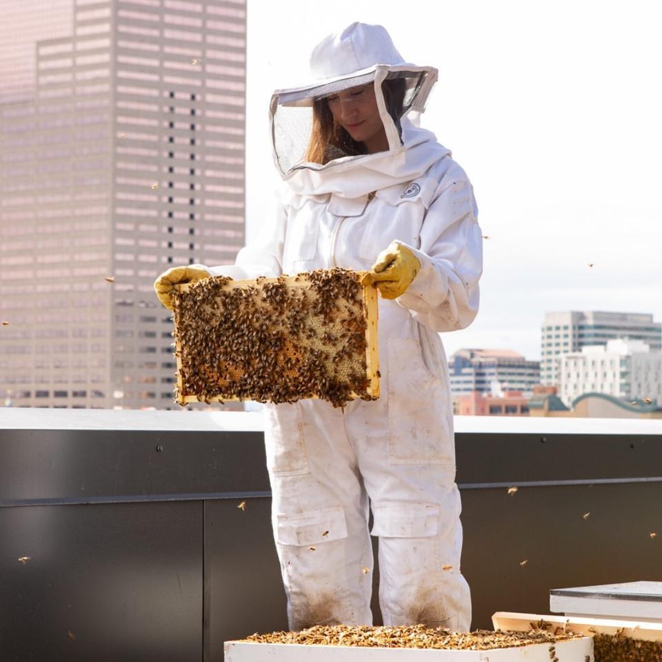 beekeeping, honey, hive, bee suit, beekeper, women