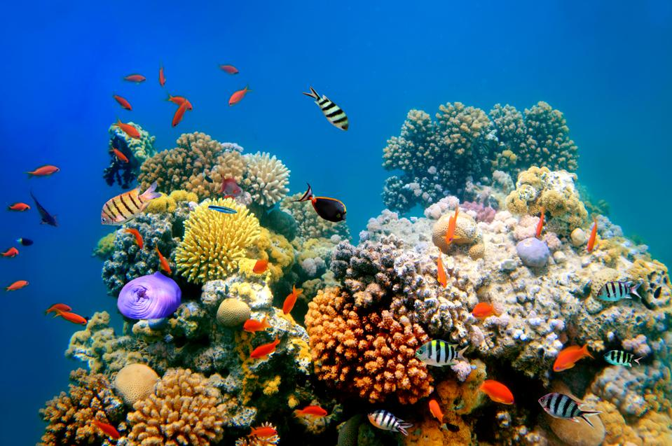 Coral reefs need iron for optimal health, just like humans.