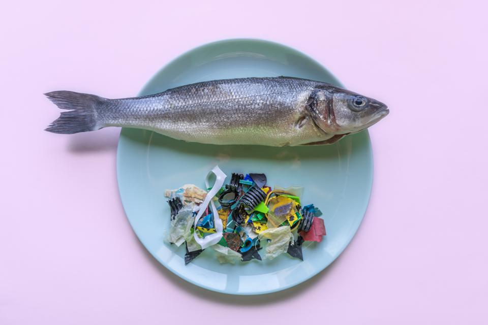 A seabass on a dinner plate with a side of plastic trash.