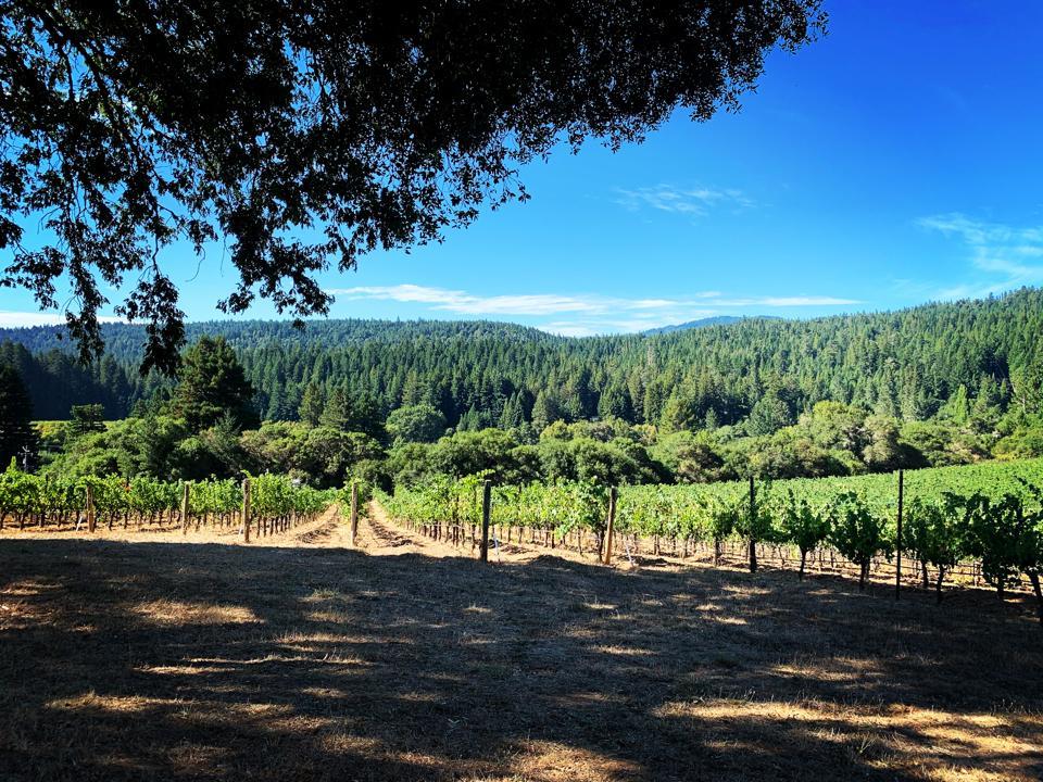 Long Meadow Ranch