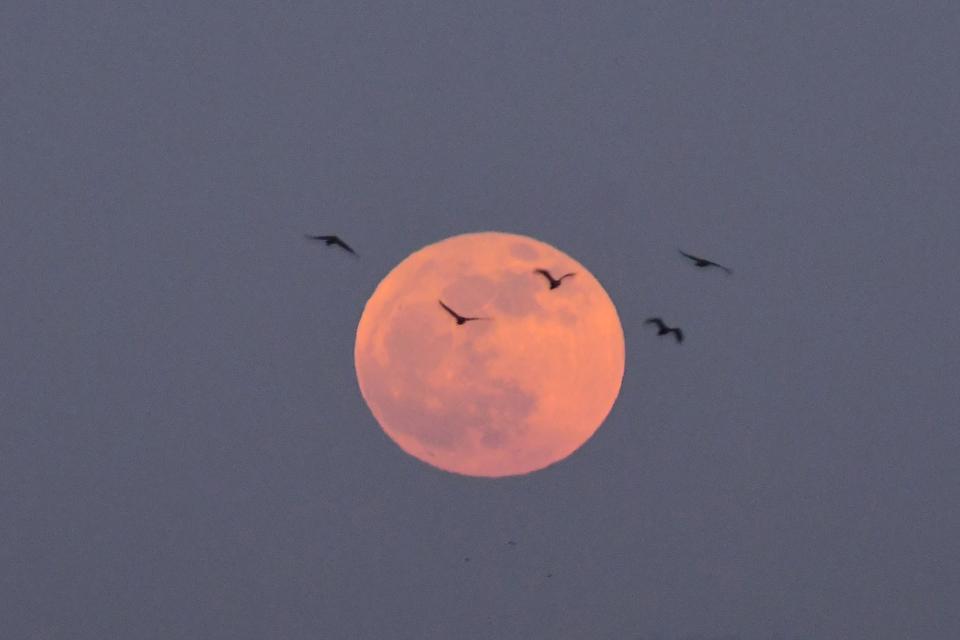 Full moon Kartik Purnima In Assam. India