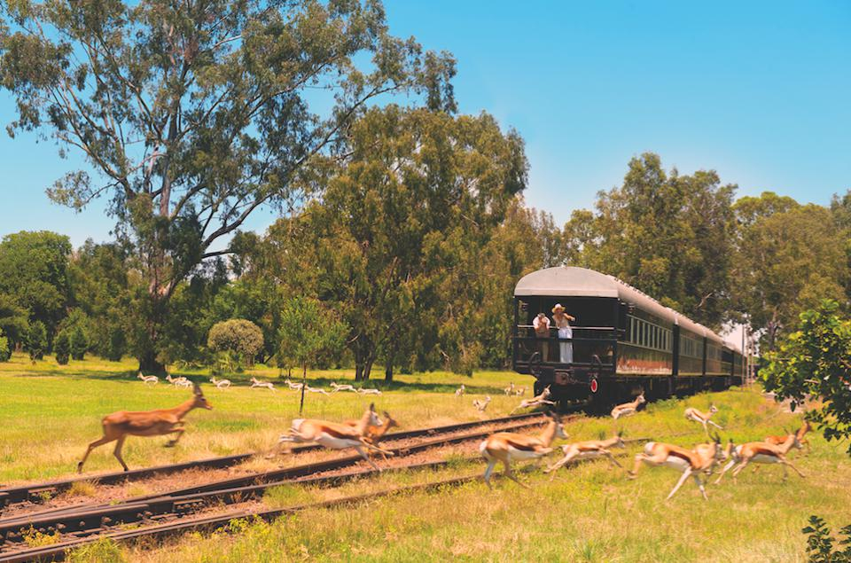 Rovos Rail train crossing behind wild animals in Africa