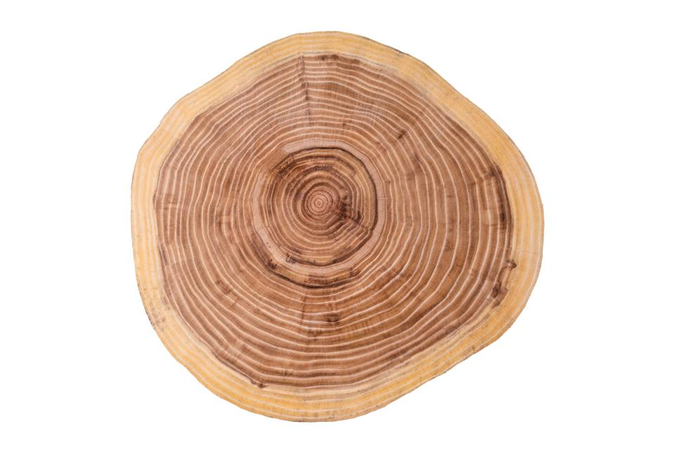 A cut tree trunk, showing the tree's age rings.