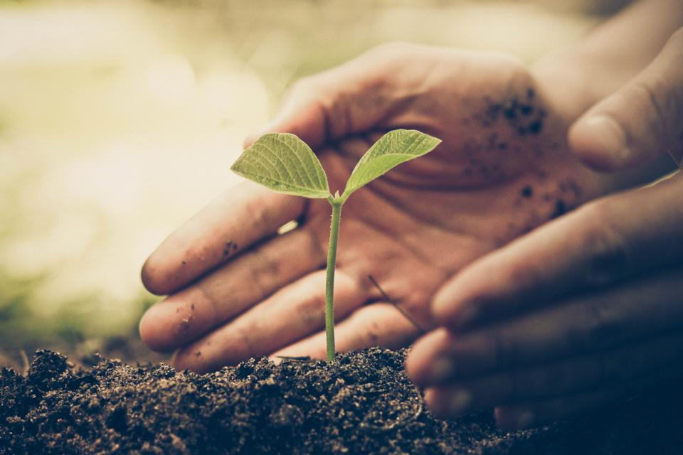 Hand of a farmer nurturing a young green plant as part of reforestation efforts.