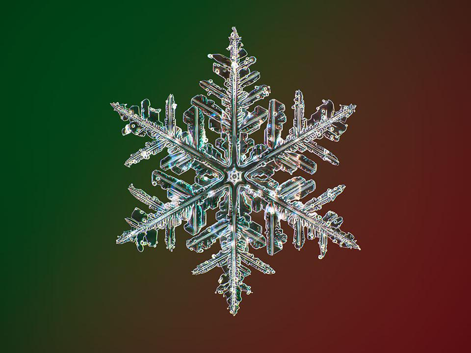 Another of Nathan Myhrvold's snowflakes.
