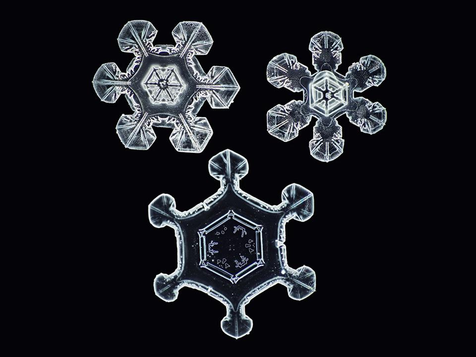 No two snowflakes are completely alike. Here's another Nathan Myhrvold photo.