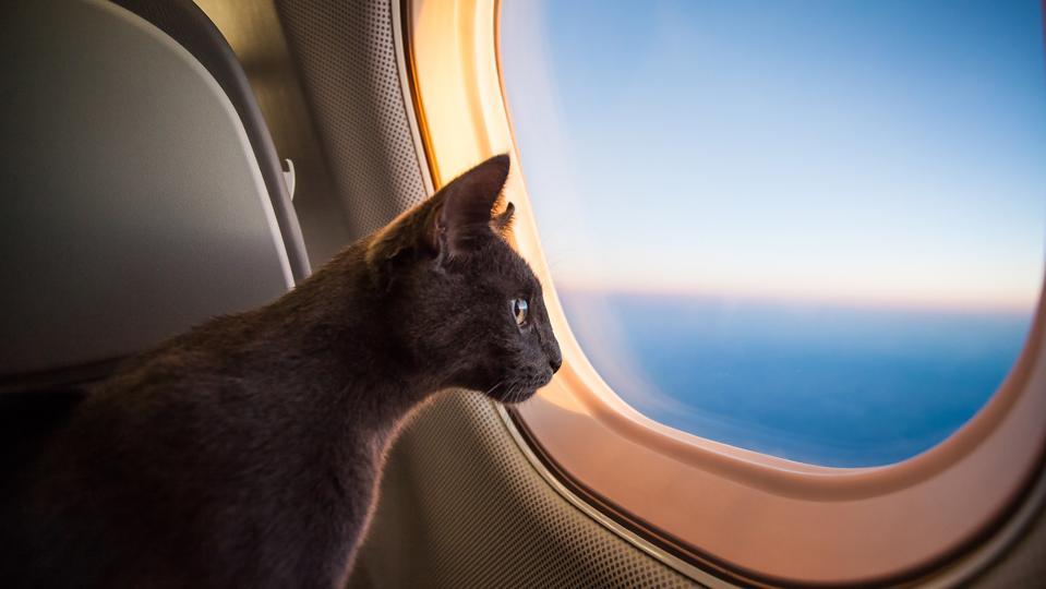 Curious passenger