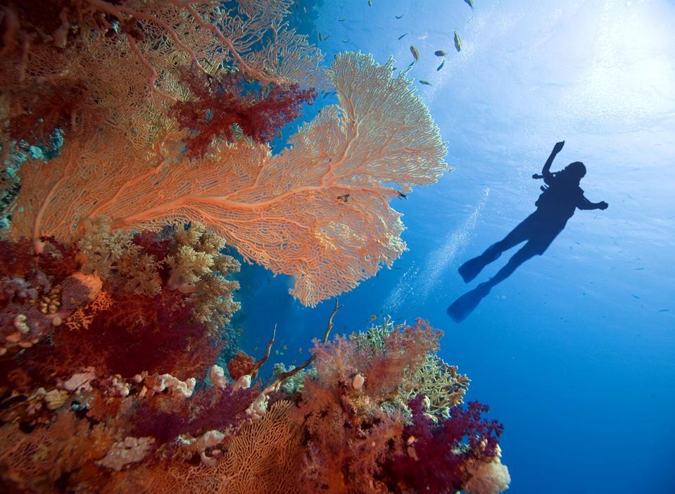 Dive in underwater
