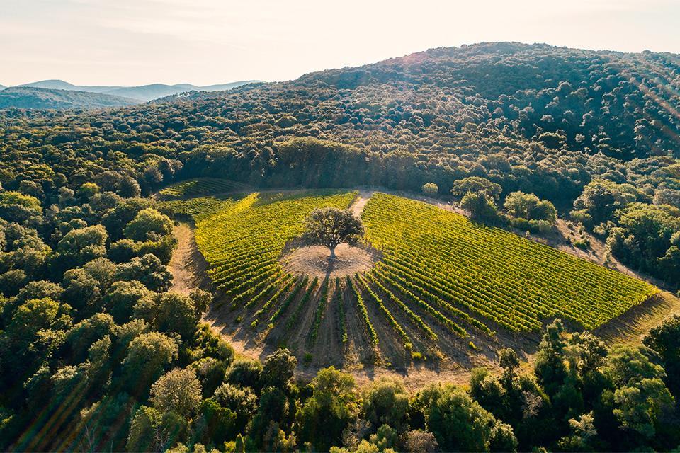 Tenute Argentiera's iconic Ventaglio Cabernet Franc vineyard