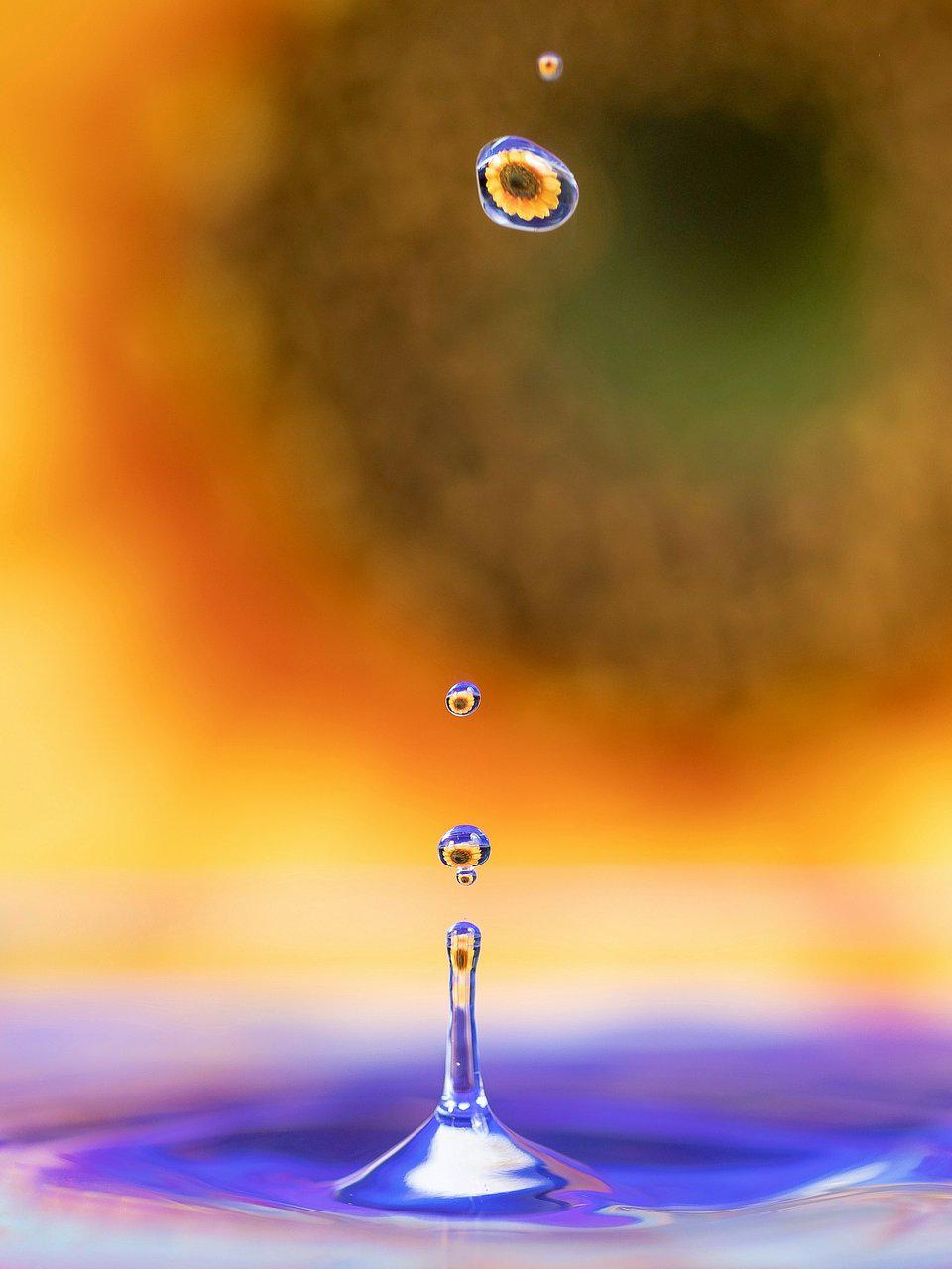 A drop of water reflecting a yellow daisy.