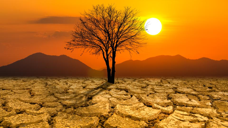 Arid areas, cracked soil, dead trees in the heat of the sun