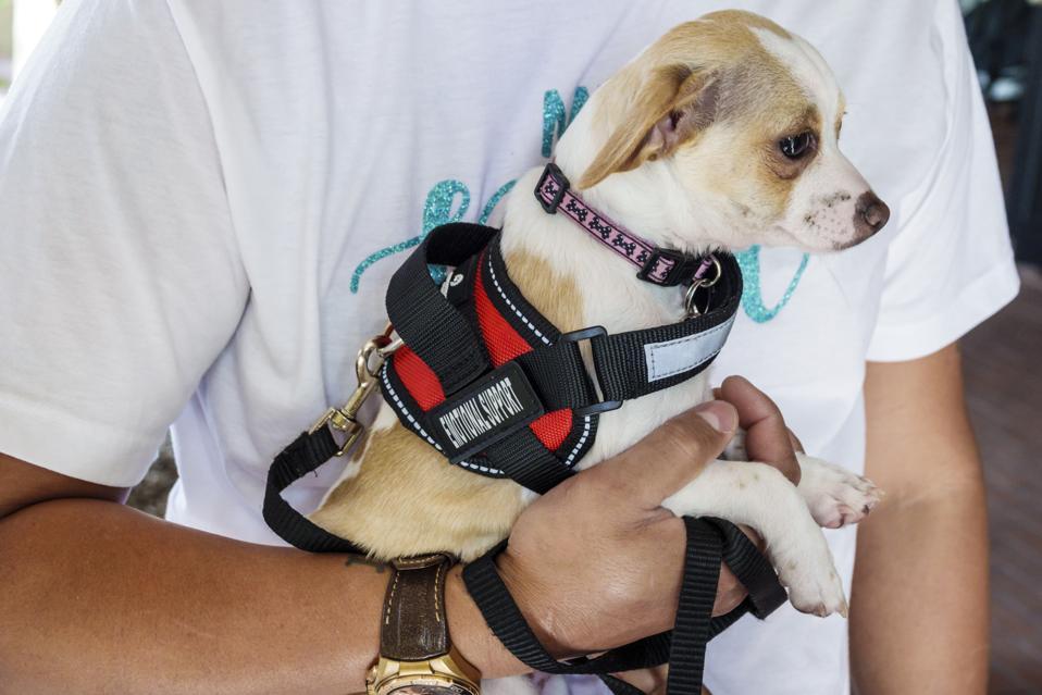 Orlando, emotional support animal, ESA