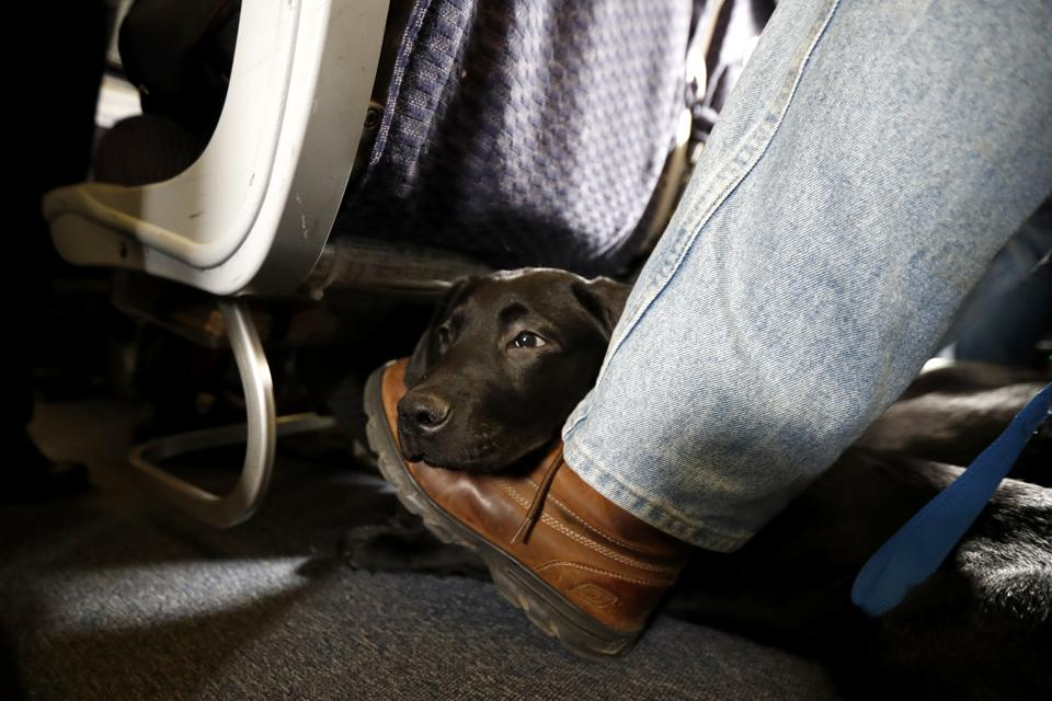 Animals Dealths on Planes