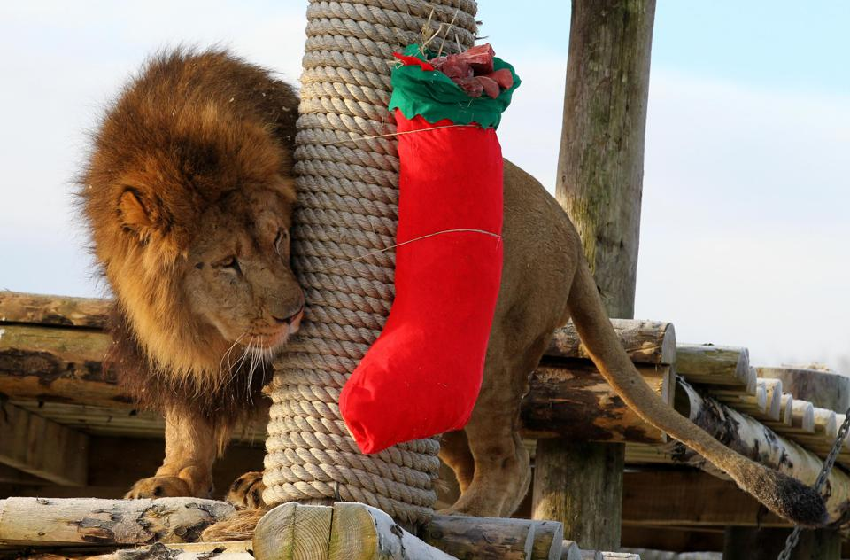 Everybody loves stocking stuffers!