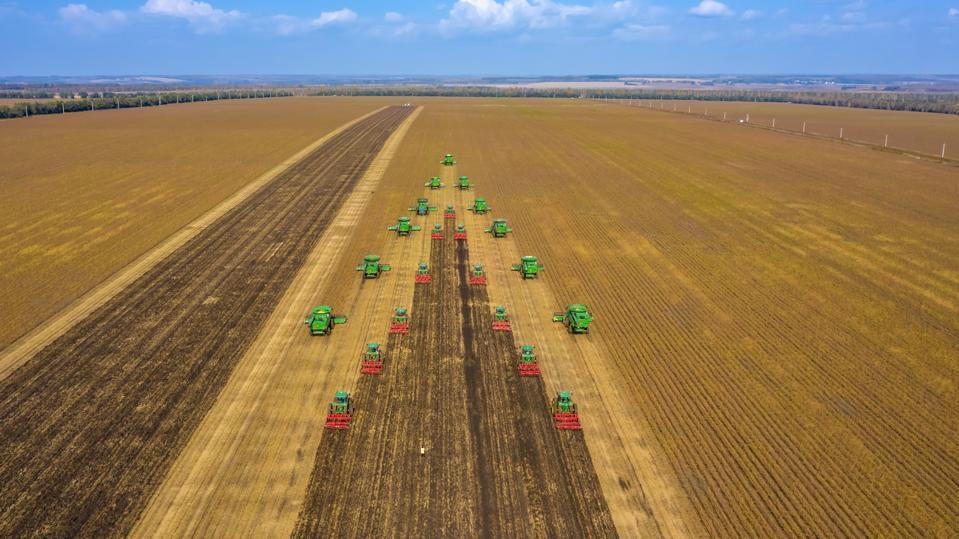 Soybean Harvest In Hegang