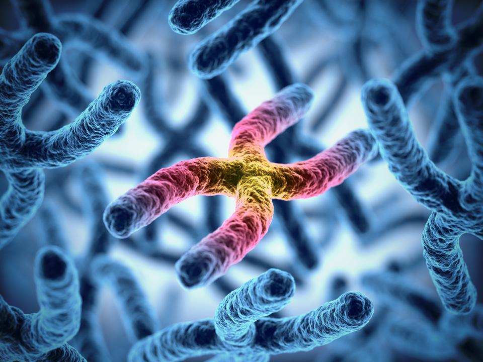 Chromosomes 3d illustration