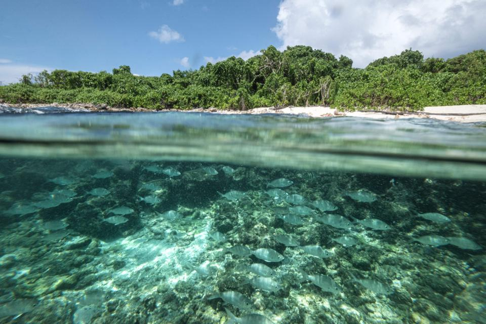 Seen here 21 Nov 2019, shows an underwater view underwater in Cousin Island, the nature reserve managed by Nature Seychelles.  Indian Ocean islands like the Seychelles are also confronting the challenge of climate change.