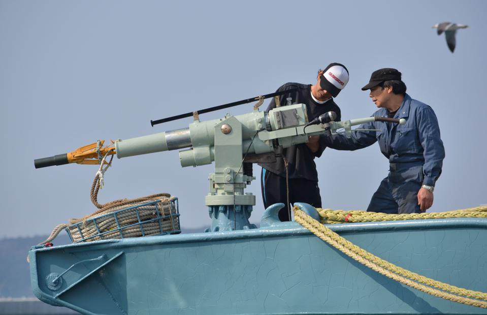 Crew of a whaling ship check a whaling gun or harpoon before departure at Ayukawa port in Ishinomaki City on April 26, 2014. A Japanese whaling fleet left port on April 26 under tight security in the first hunt since the UN's top court last month ordered Tokyo to stop killing whales in the Antarctic.