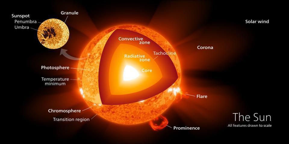 This cutaway showcases the various regions of the surface and interior of the Sun.