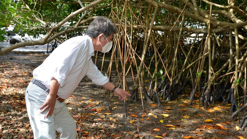 13 Dec 2020: Japan's Minister of Foreign Affairs visits mangroves saturated in oil in Mauritius on a visit on Sunday