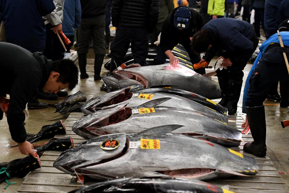 Tuna stocks have collapsed globally, some by as much as 90%. Yet Japan continues to be a big driver for tuna demand and supply. Bluefin tuna prior to the new year's first auction at the Tsukiji fish market in Tokyo on January 5, 2017.