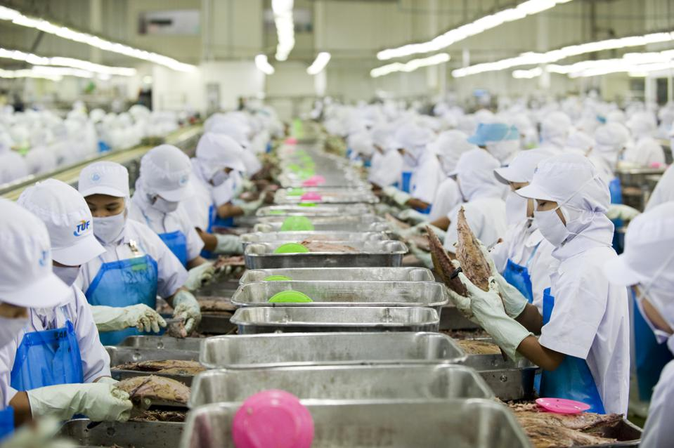 Factory workers on a tuna production line. A similar arrangement is owned by Mitsubishi under British-based Princes brands of food businesses