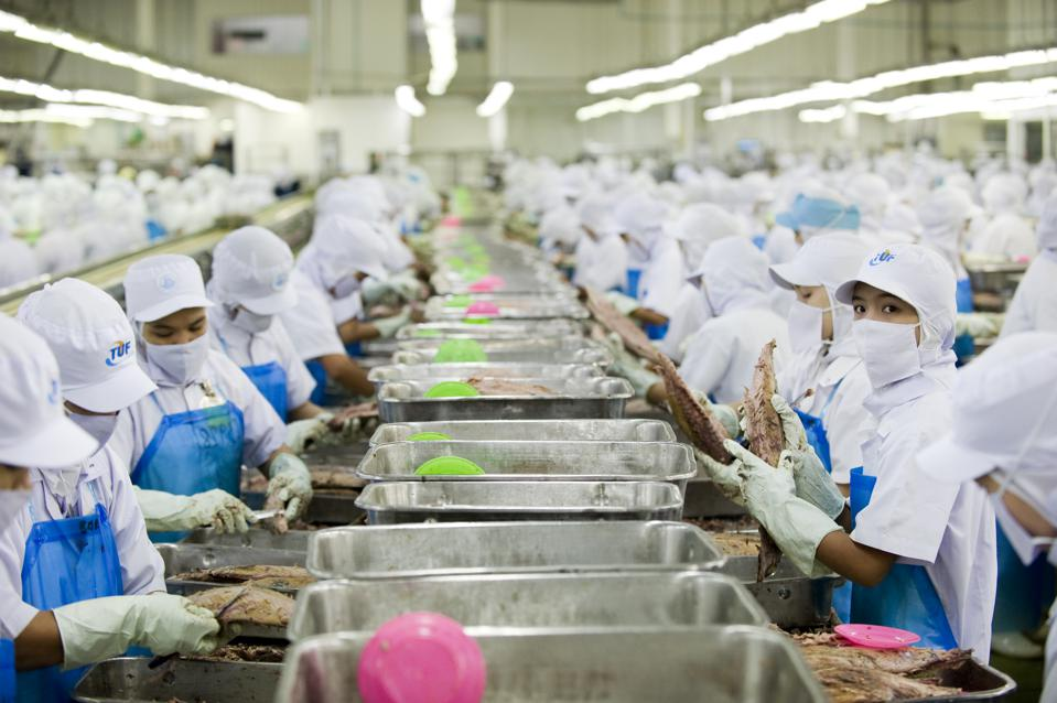 60% of tuna is processed in factories in Thailand