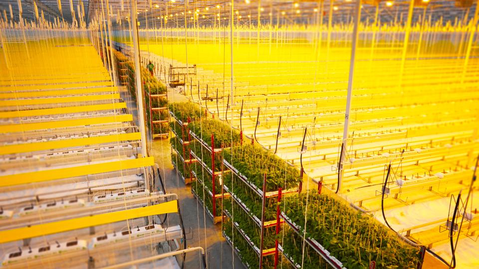 Inside AppHarvest's 60 acre state-of-the art indoor farm in Morehead, KY.