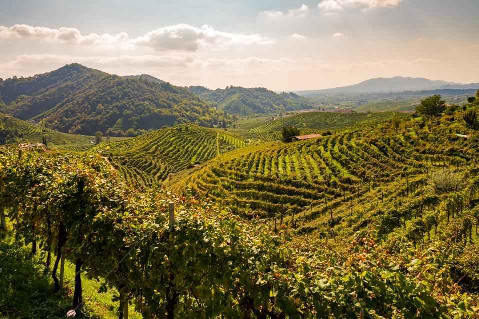 Vineyards in Valdobbiadene, Veneto, Italy