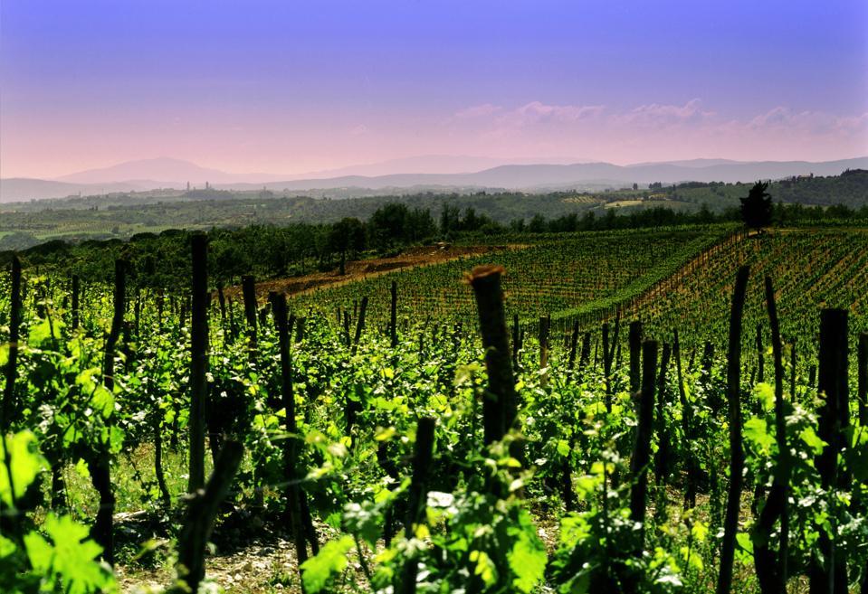 San Felice vineyards, Tuscany, Italy