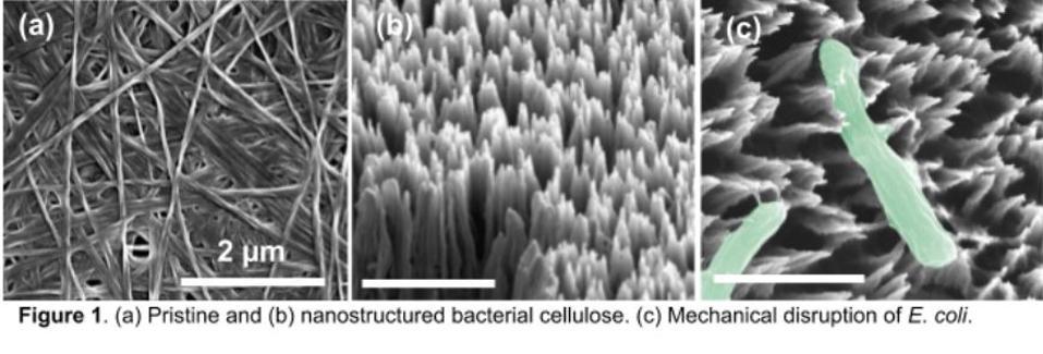 Mechanical disruption of E. coli