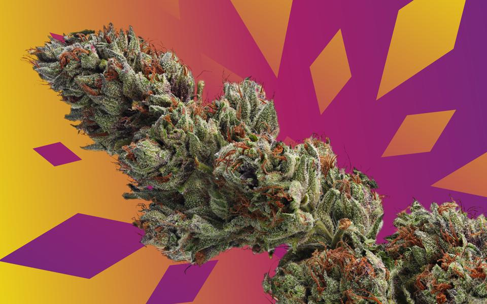 Cannabis flowers of the variety Runtz in front of a stylized graphic background.