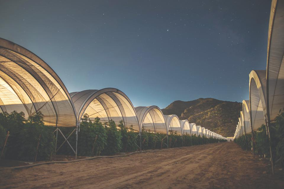The expansive 85-acre grow of Raw Garden in Santa Barbara, California, at night.