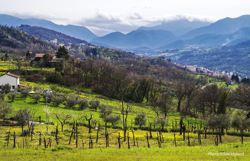 Landscape at Paternopoli in the Taurasi zone,  Campania