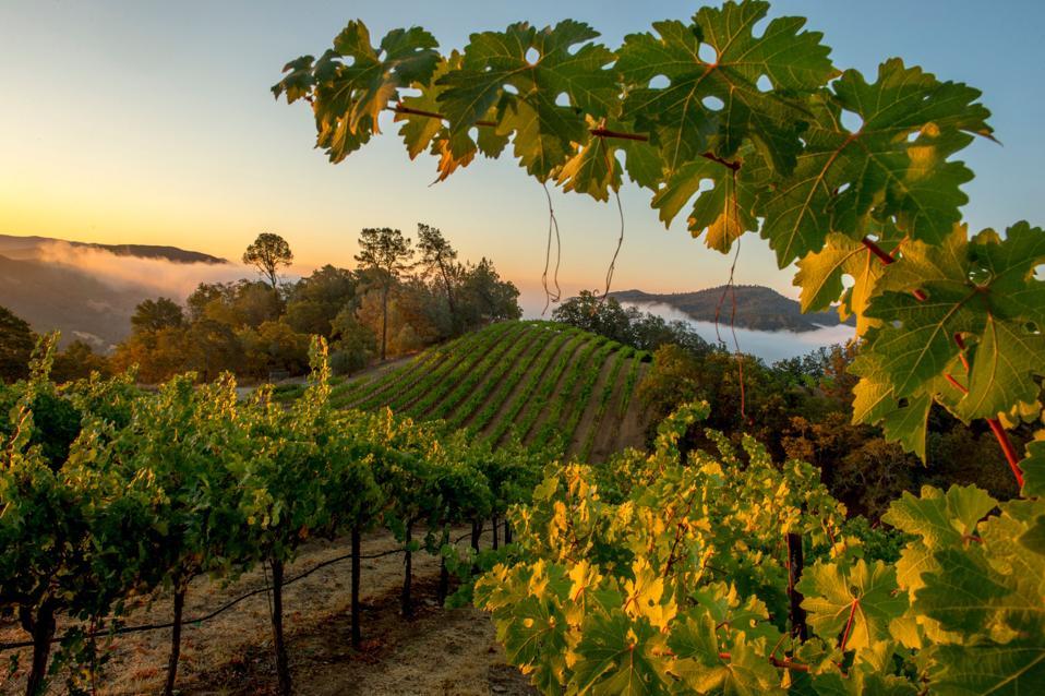 Somerston Estate Vineyards in Napa Valley, California