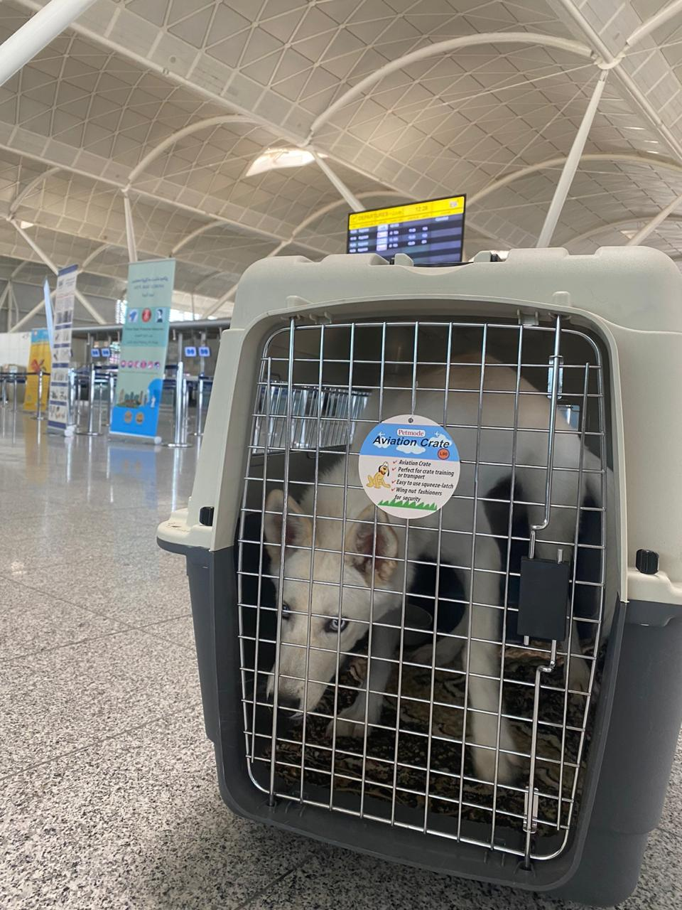 flying with pets, flying with dogs, international pet travel, dog, dog carrier, Military